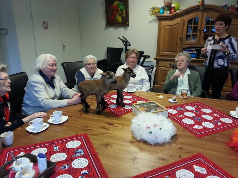 organiseren voor ouderen